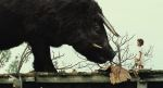 Beasts of the Southern Wild (31)